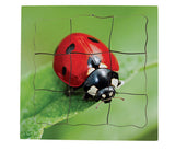 Layered Life Cycle Ladybird - JJ602
