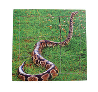Layered Life Cycle Snake - JJ644