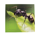Layered Life Cycle Ant - JJ646