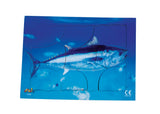 Endangered Animals - Blue Fin Tuna  - JJ742