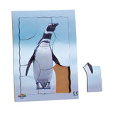 Endangered Animals - Megallanic Penguin - JJ747