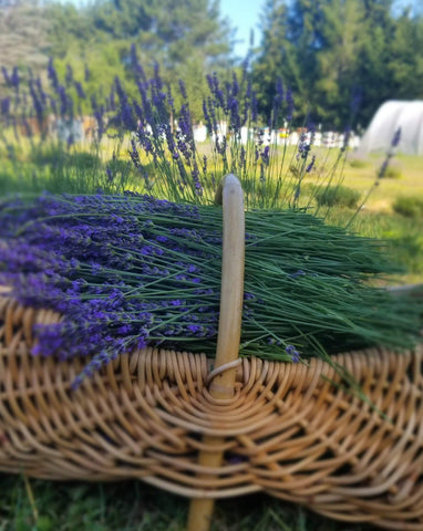 Lavender {Dried}