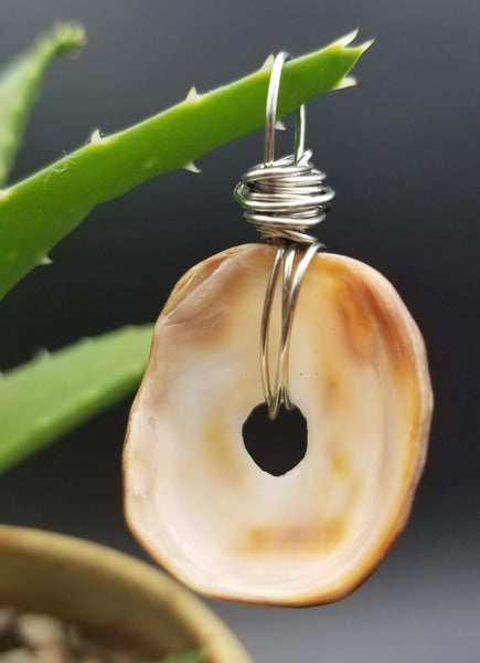 Pendant (limpet shell-brown/silver wire)