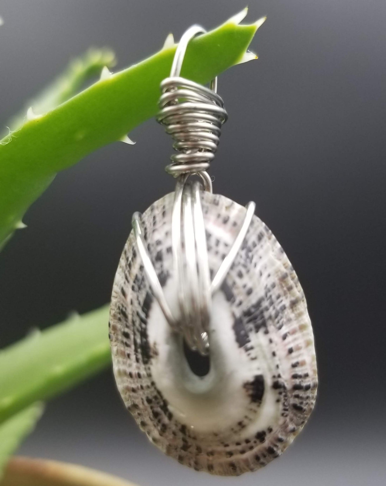 Pendant (limpet shell-white speckled/silver wire)