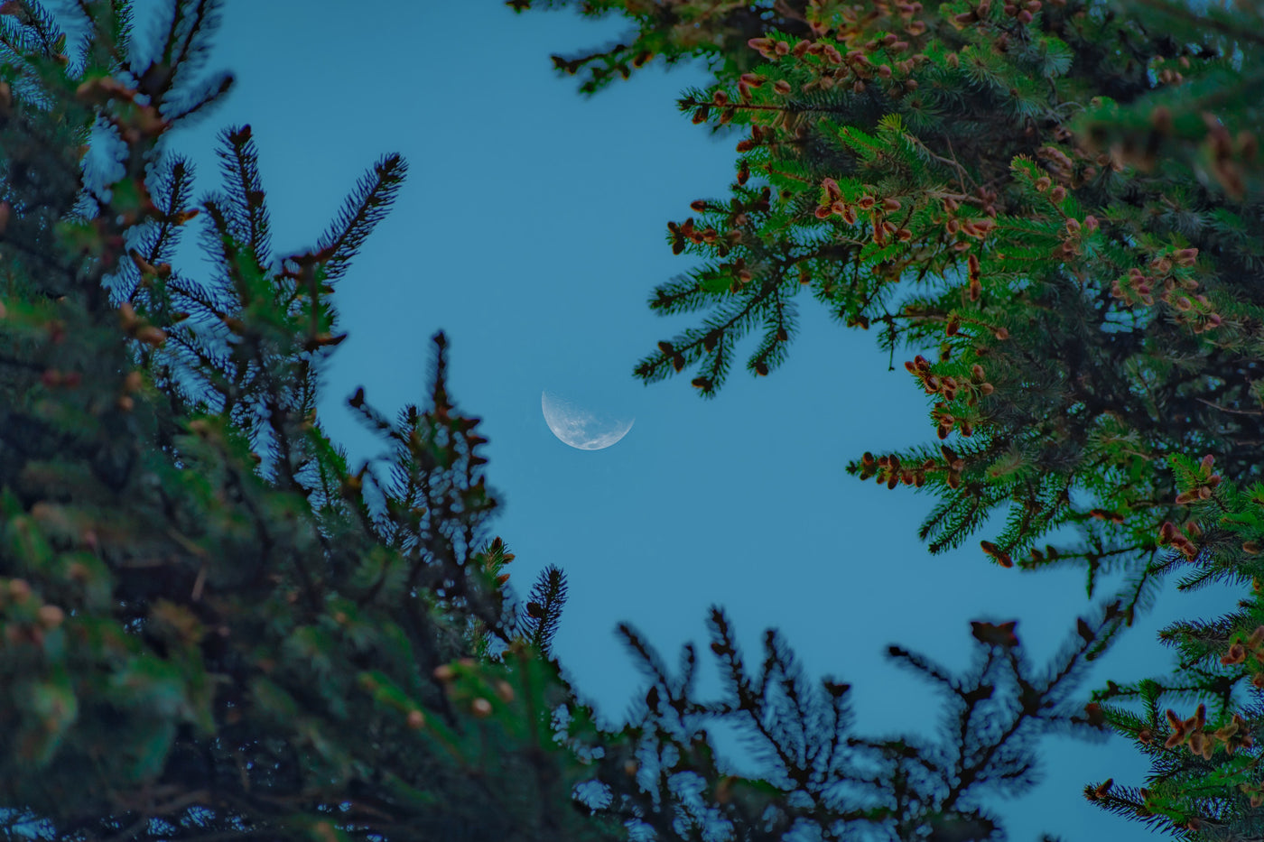 Gardening with the Moon: guest blog post by Erin Duffy Osswald