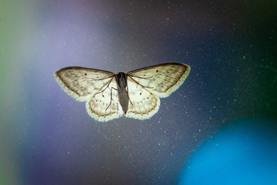 Moth Magic - The Power and Necessity of Grief