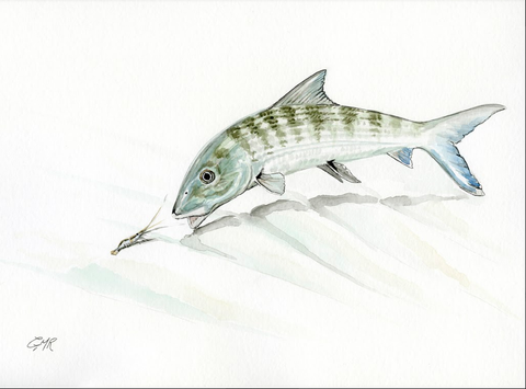 Watercolor Bonefish - Print