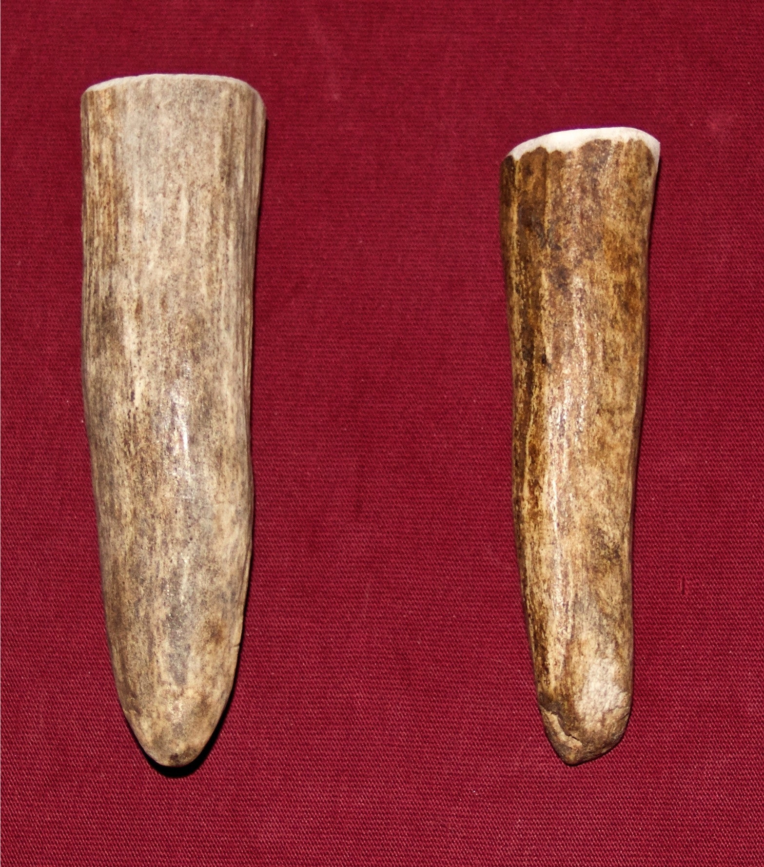 Small Moose Antler For Dogs Up to 10 Pounds