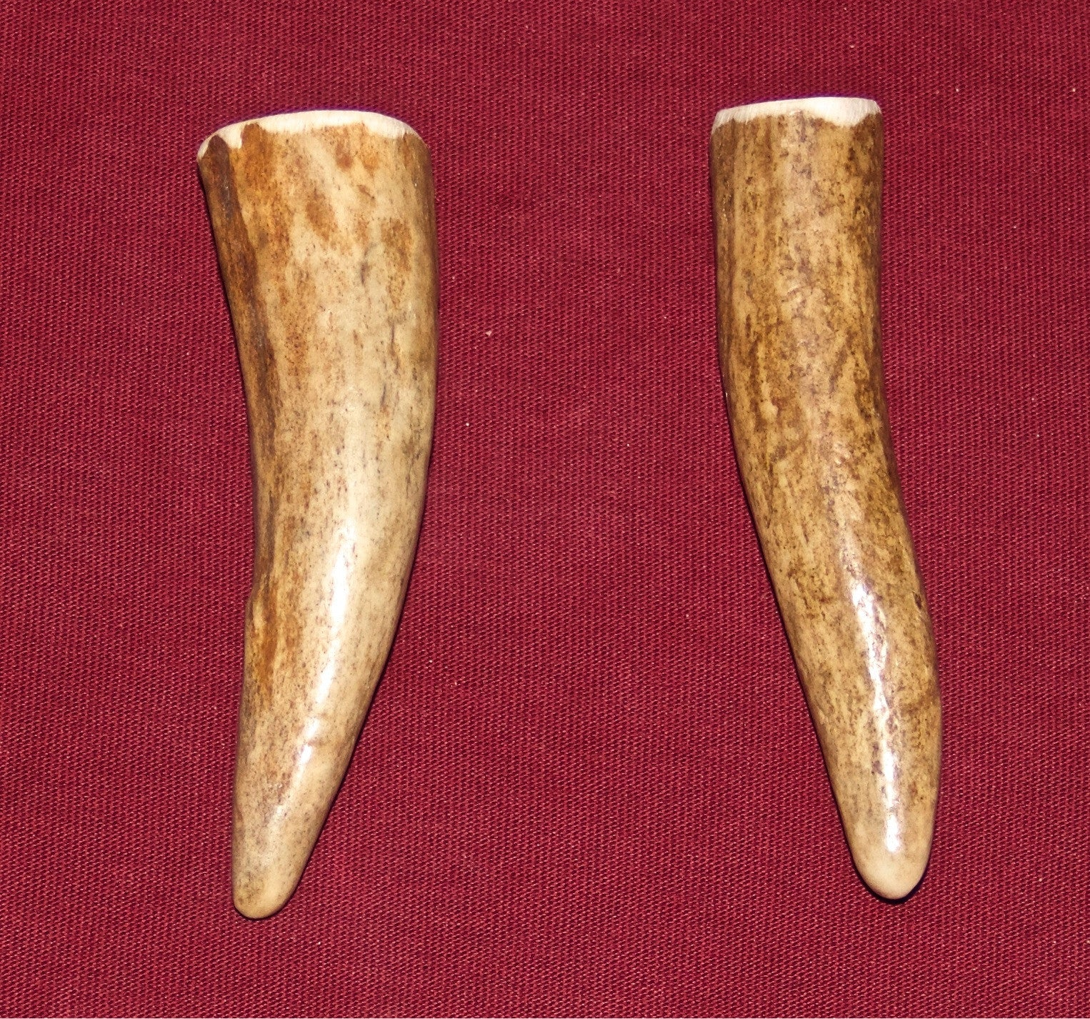 Extra Small Elk Antler for dogs up to 5 Pounds