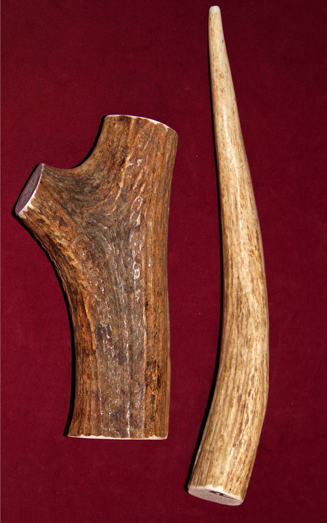 Extra Large Elk Antler For Dogs Over 60 Pounds Got Antler