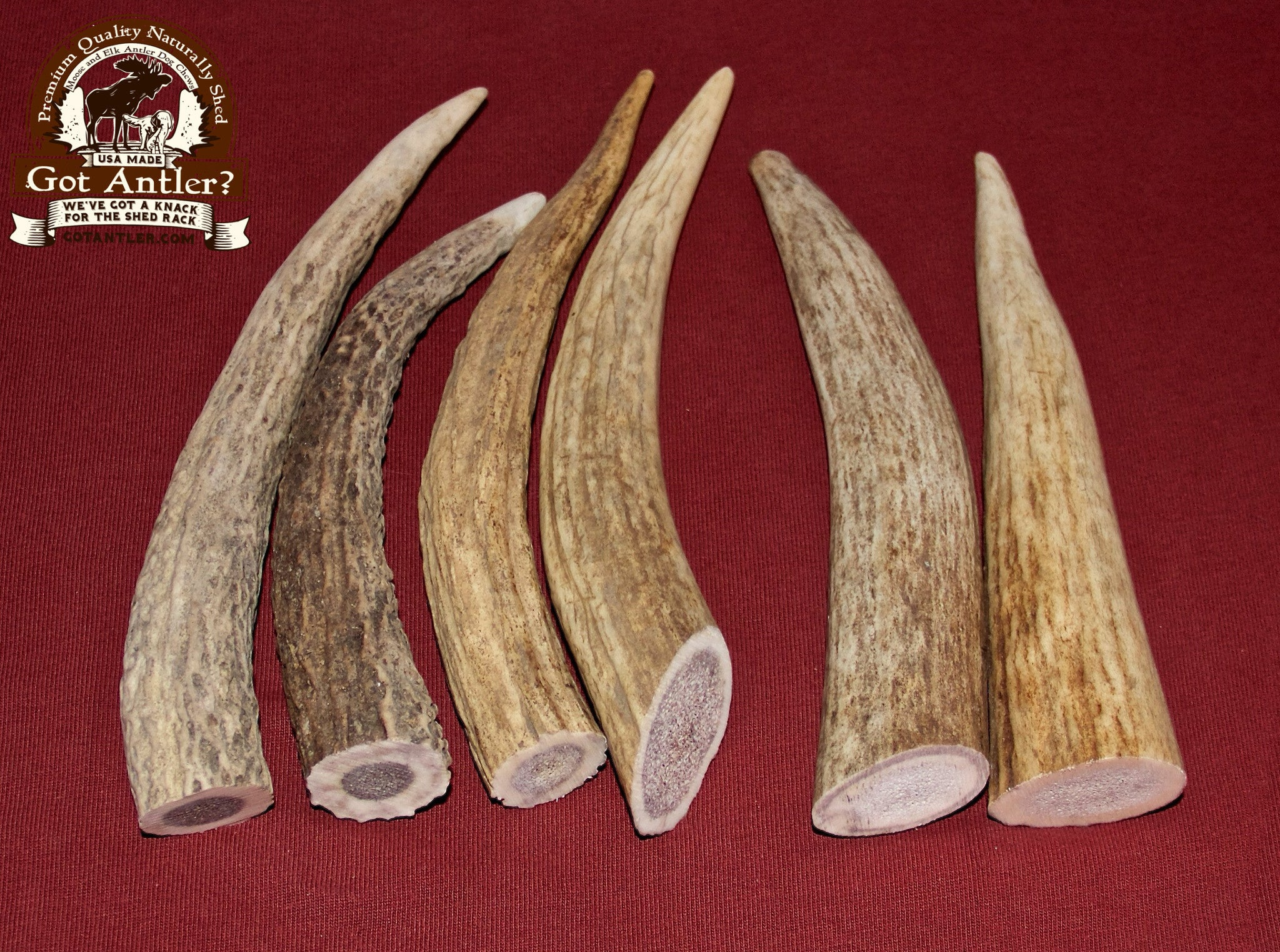 Small Elk Antler For Dogs Up To 10 Pounds