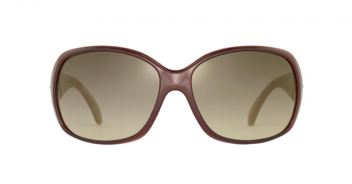 Sinner Amos Sunglasses for Ladies in Brown