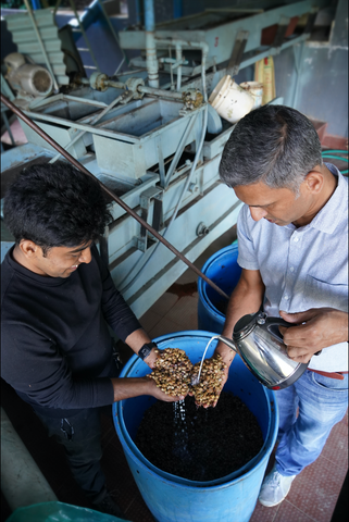 milk and honey coffee processing