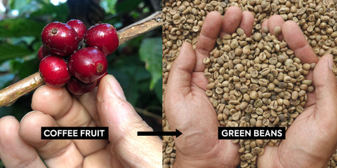 coffee processing washed vs natural coffee