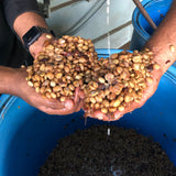 milk processing coffee buy coffee online india