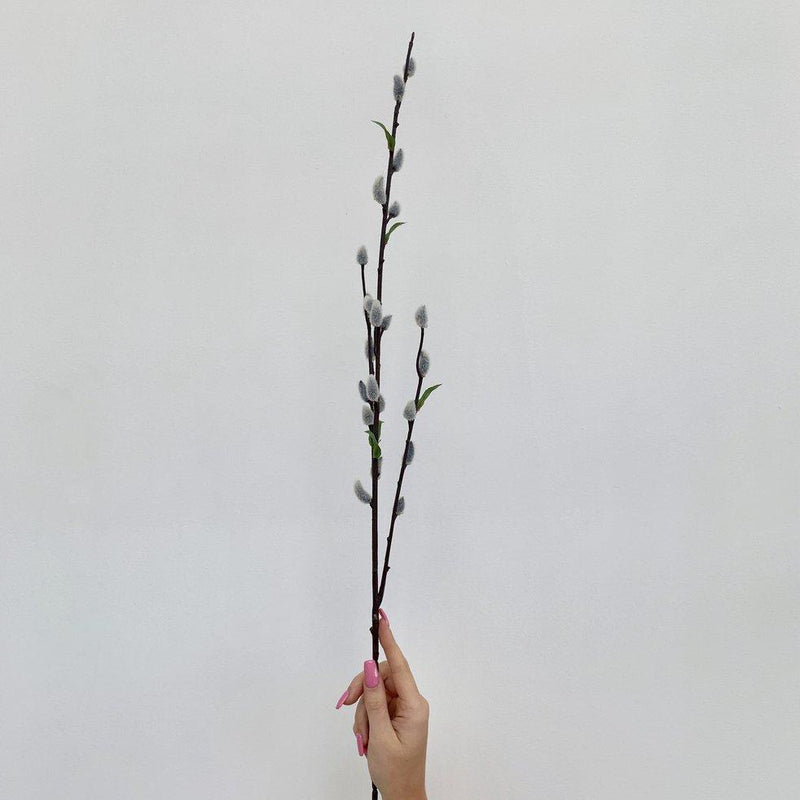 Grey Pussy Willow Stem