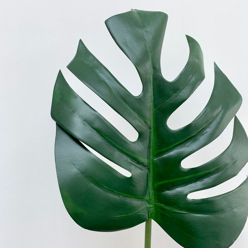 Monstera Leaf Stem
