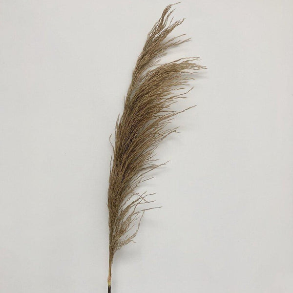 Natural Dried Pampas Grass With Faux Stem