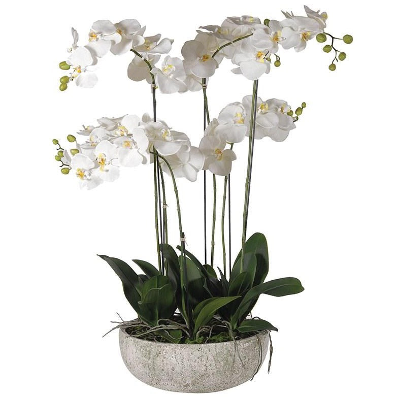 XL White Orchid In Concrete Bowl