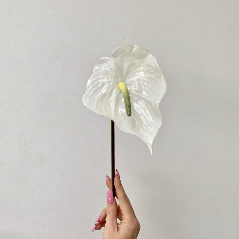 Simple White Anthurium Stem