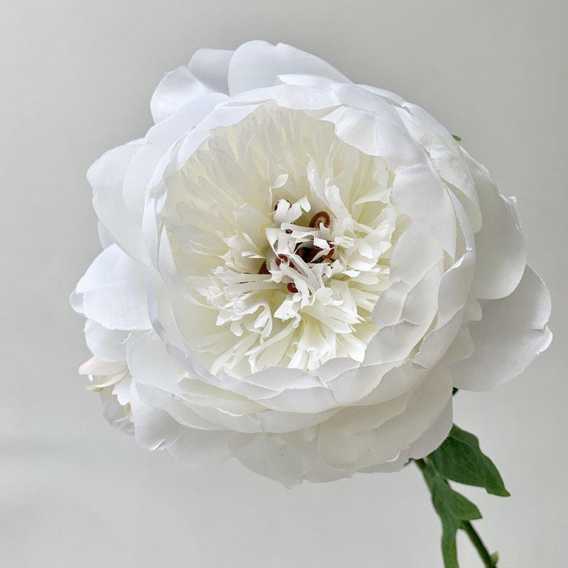 White Peony Large Full Bloom With Bud