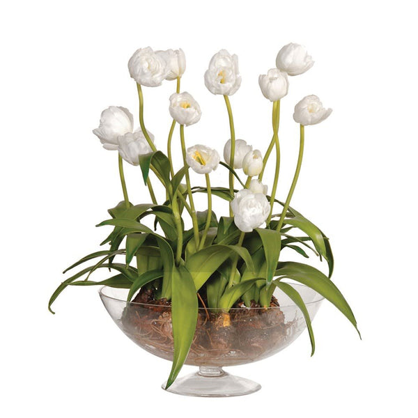 White Tulips with Bulbs Pre-Set in Glass Footed Bowl