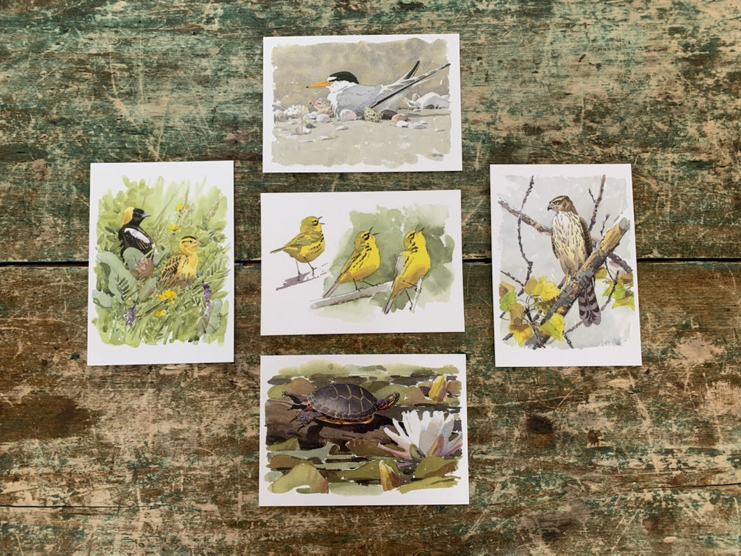 Audubon Bird Note Cards