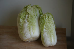 Napa Cabbage, Organic (Kitchen Garden Farm)