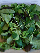 Load image into Gallery viewer, Winter Gem Salad Mix, Organic & Local
