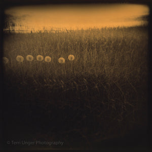 Appleton Farms Photographs, Matted Prints (Fine Art Photography by Terri Unger)