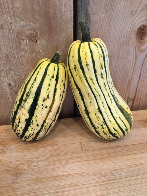 Delicata Squash, Organic (Appleton Farms - Trustees Grown)