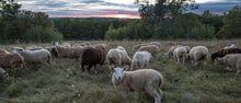 Load image into Gallery viewer, Lamb, 100% Grass-fed & Pasture-raised (Five Sigma Farm)
