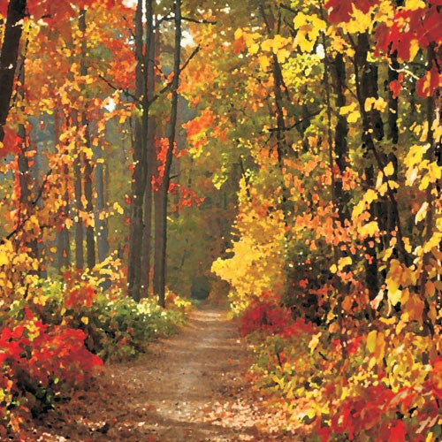Autumn Forest Splendor Metal Wall Art