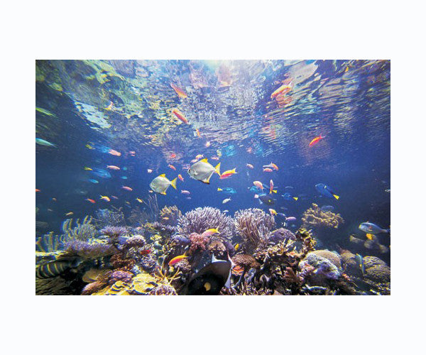 Coral Reef Fish Metal Wall Art