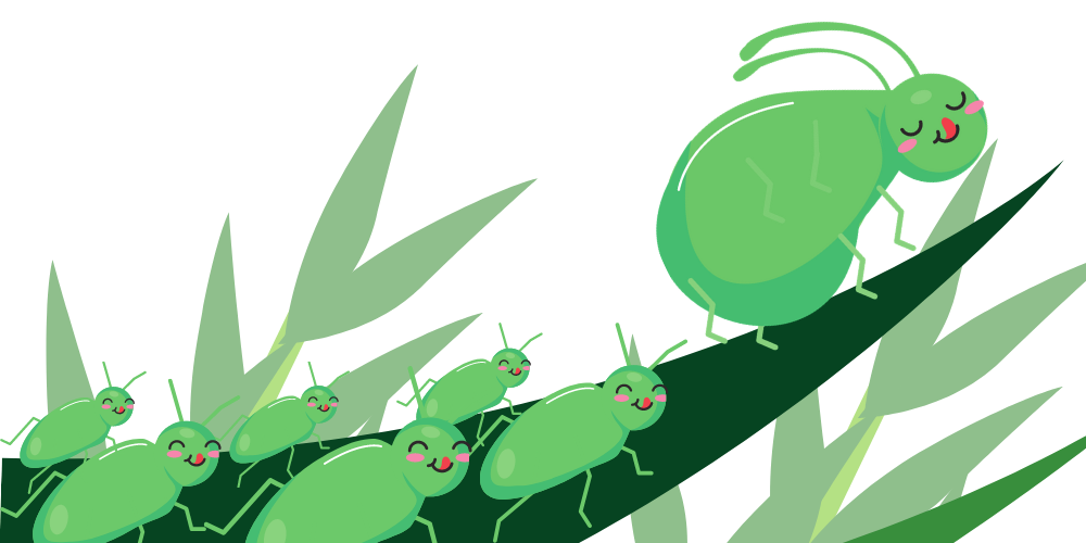 All aphids are clones of its mother
