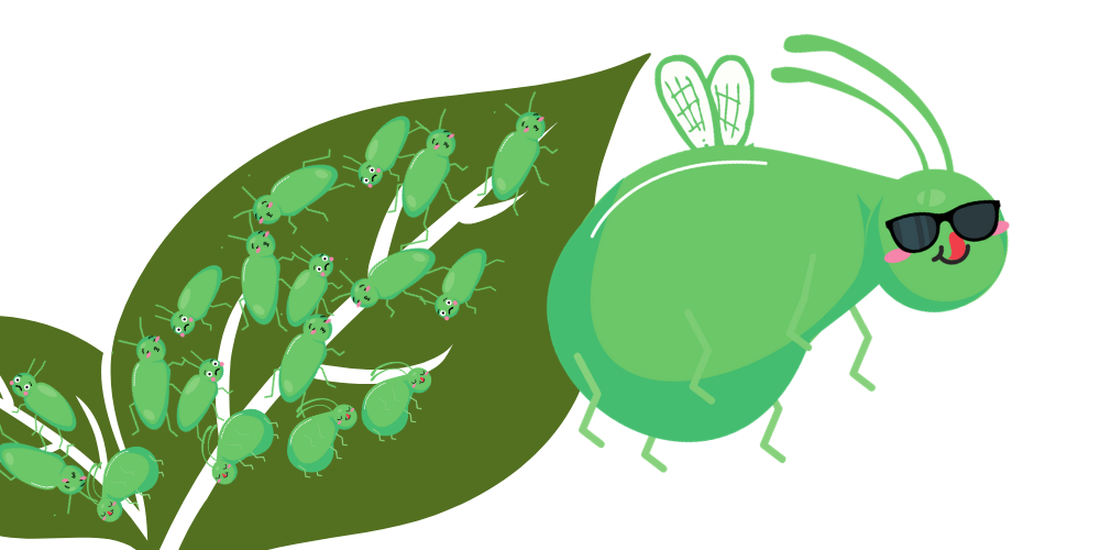 Wing polymorphism in aphids