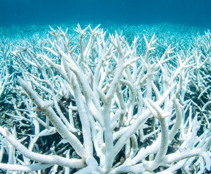Protect our coral reefs by choosing the right sunscreen