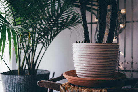 The Brotique Edinburgh | Indoor Plants 2017 | What is hygge | Hygge home