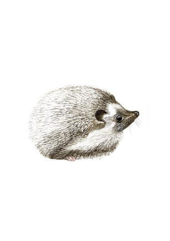 Hedgehog Art Print Miniatures - Esque