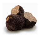 Fresh Truffles and Truffle Products