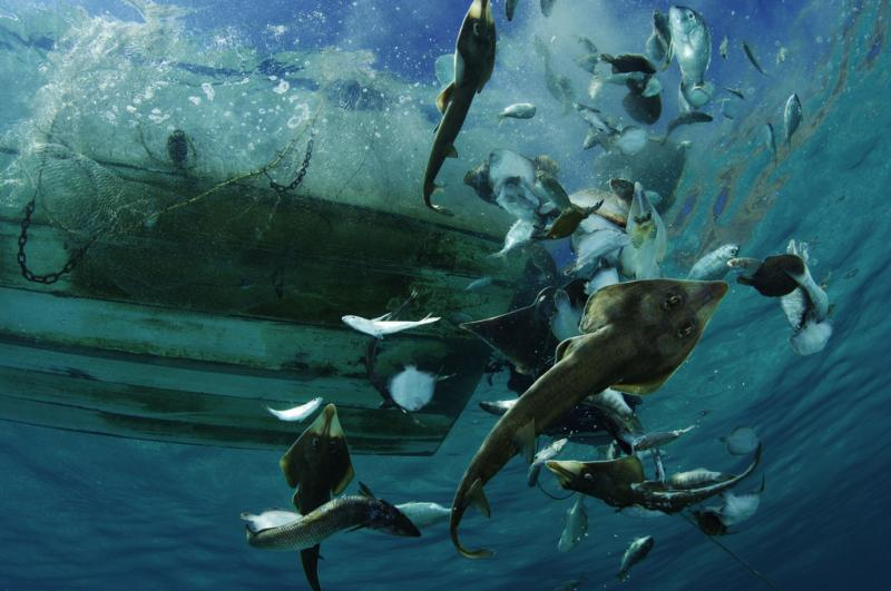 bycatch waste being discarded