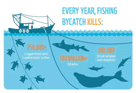 commercial fishing bycatch