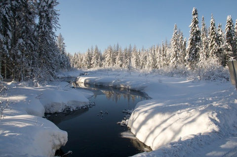 Where the River Runs - Paint a beautiful Laurentian Winter scene (online, live)