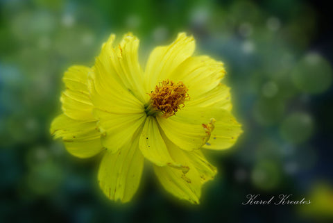 "Yellow wild flower, 20""Hx14""W"