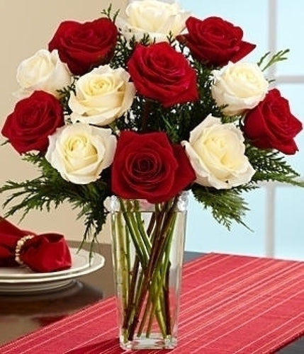 Red and White Christmas Roses