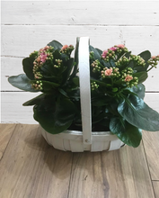 Load image into Gallery viewer, Kalanchoe Planter