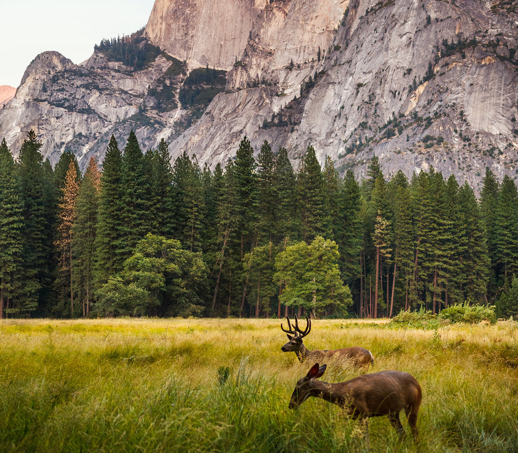 July is National Park Month
