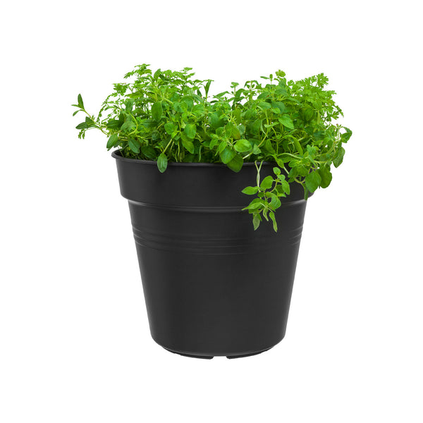 Basic Grow Pot - 11cm