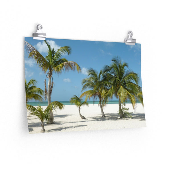 Beach Palms -  photo poster