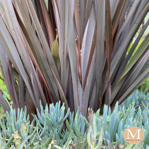Melisse & Co. - Garden and Landscape Inspiration for Drought Tolerant Plants, Xeriscapes